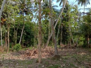 Land for sale Nattandiya