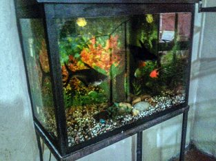 USED FISH TANK TO SELL