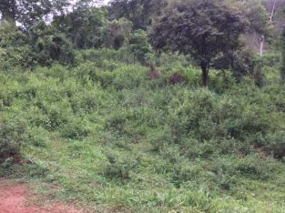 Land for sale in matale kaludewala