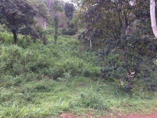 Suitable land for sale in Matale