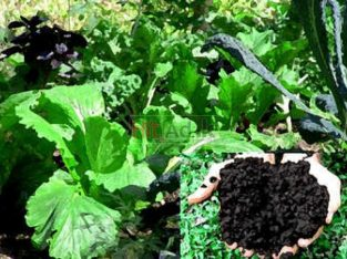 Highest Quality Compost From Naturecare 0770500352