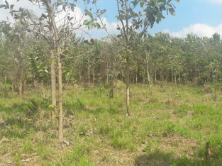 Teak Land for Sale in Anamaduwa