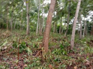 Land for sale in Matara