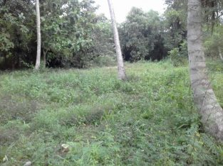 land for sale wariyapola