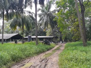FARM AND COCONUT STATE in HIRIPITIYA 17 acres