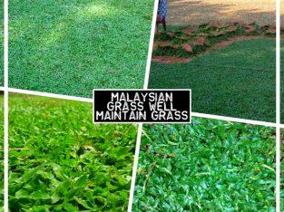 Interlock Grass Supply Garden Design