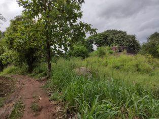 Land for sale in Dambulla town area – 225 perch