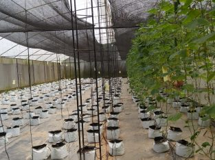 poly tunnel green house