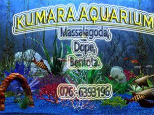Kumara aquarium bentota