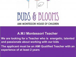 A.M.I Montessori Teacher