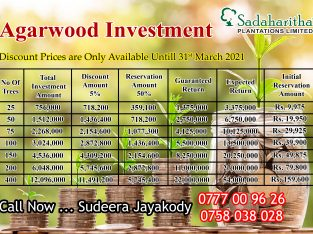 Plan your investment with Agarwood