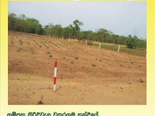 Land for Salegampaha