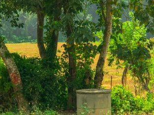 Land for urgent sale in Gampaha