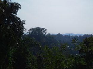 Land for Sale-Peradeniya
