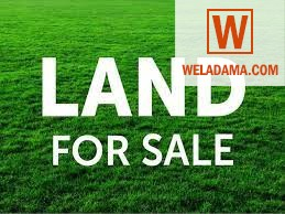 Valuable land for sale in Colombo city.