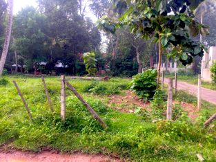 20 Perches Residential Land for Sale in Kochchikad