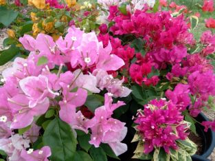 karunaapala Flowers and Grass suppliers