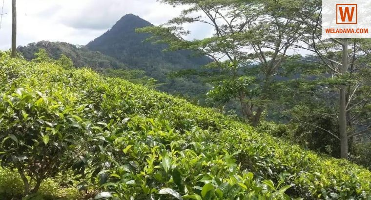 Beautiful AGRICULTURAL land for sale Idangoda