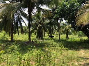 5 ac coconut land for sale
