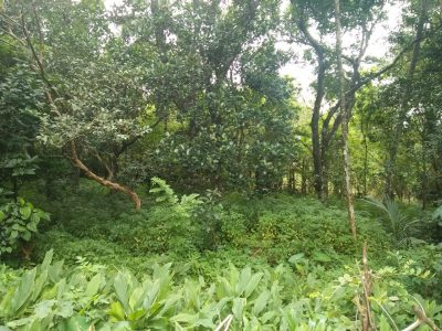 Land and house for sale ududumbara