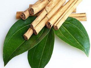 වාර කුරුදු පැල(Cinnamon plants)