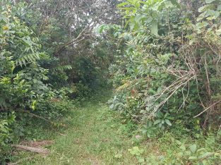 Land for sale in dompe area