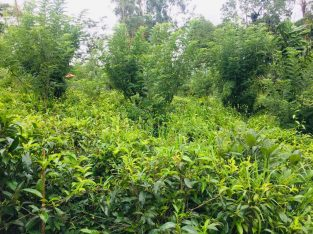 land for sale in belwood